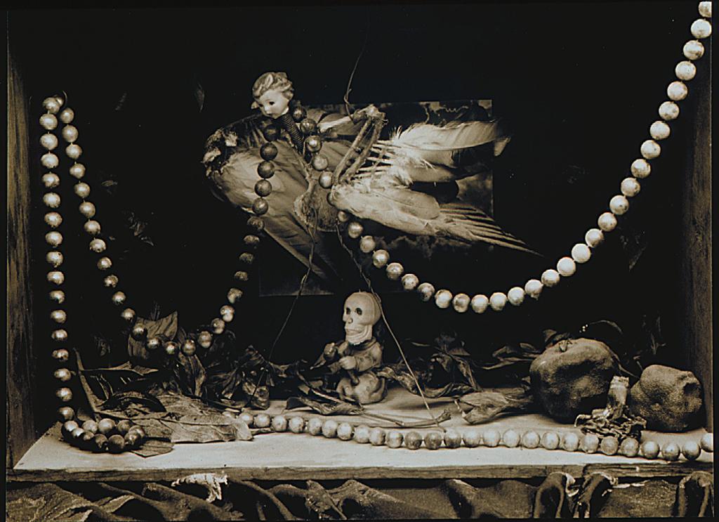 slbird carcas